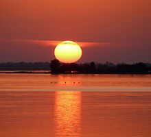 Lake Dora Sunset by Susan  Kimball