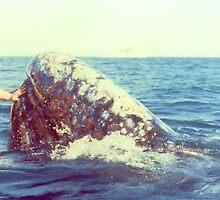 Sheila Meets The Whale by artwhiz47