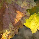 autumn by Teresa Pople