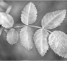 leaf 2 by Bridie Flanagan