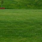 a huge green lawn by Valerii Kotulskyi