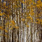 Aspen Vibrance by CrowningGlory