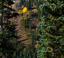Colorado Mountainside by CrowningGlory
