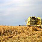 Cutting the corn  by Rob Hawkins