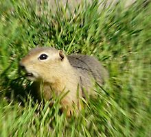 Prairie Dog,In A Blur Of Green,,Dizzy  With Delight by MaeBelle