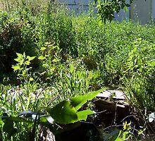 Overgrown - PostCardArt by owlspook