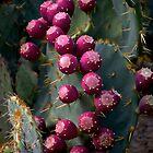 Cactus Still Life by rrushton