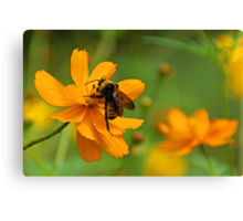 Bumble Bee Busy Canvas Print