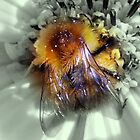 BEES   BUGS  AND GARDEN FLOWERS by Heidi Mooney-Hill