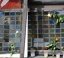 Roses on broken glass by julie08