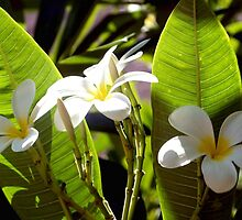 Plumeria bunch and buds by ♥⊱ B. Randi Bailey