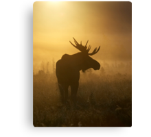 Bull Moose in Fog Canvas Print