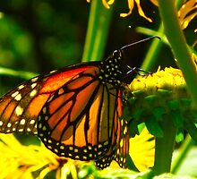 Tiffany lamp Butterfly by MarianBendeth
