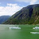 Ice Floats, Alaska by Alberto  DeJesus