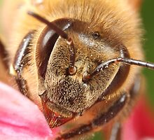 Urban Bee Up Close by KAISER79