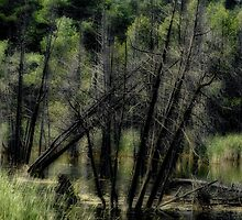 Deadwood Swamp by sundawg7