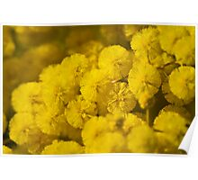 Puffs Of Yellow Poster