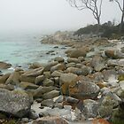 Fog on the East Coast,Tasmania by waxyfrog