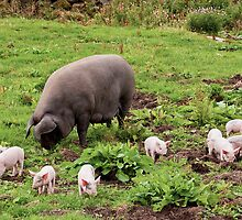 The Piglets of Wild Slack Farm by James  Key