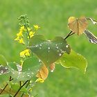 rain droplets on redbud leaves by kentuckashee