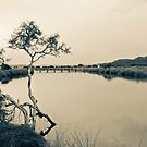 Tree in calm waters by pennyswork