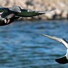 Pigeons by George I. Davidson