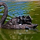 Black Swan by George I. Davidson