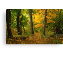 The Long and Winding Path Canvas Print