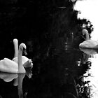Black And White Swans by SparklesDarkly