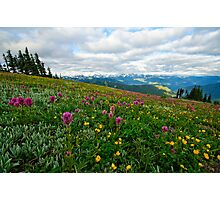 Olympic Mountains Wildflowers Photographic Print