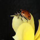 Lady Bug on a Yellow Rose by Corri Gryting Gutzman