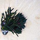 Low Tide (reversed) by Odille Esmonde-Morgan