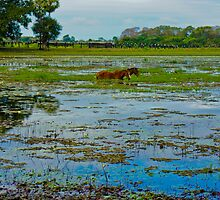 Pantanal Horse by Daniel  Archer