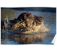 Unhappy Hippo Poster