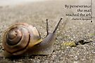 A snail's perseverance  (Card) by Tracy Friesen