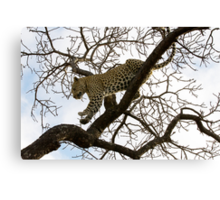 Carefully I Jump ! Canvas Print