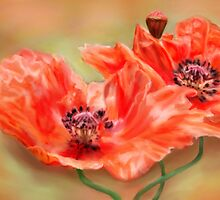 Orange Poppies by CrowningGlory