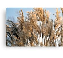 Ornamental grasses Canvas Print
