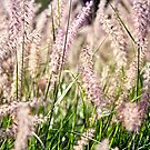 Purple grasses by Gary Rayner