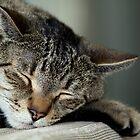 Taking a Nap by Sazzyshortness