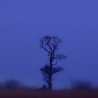 Tree in mist by Shiva77