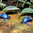 Froggies so Blue by T. Victor