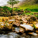 Lone Tree On River Etive by Aj Finan