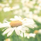 Field of Daisies  by Nicola  Pearson