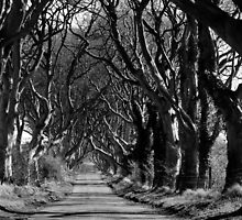 The Hedges, Armoy, Co. Antrim by Sarah Cowan