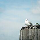 Seagull on Pier A by Misti Love