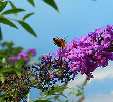 Butterfly Bush by SZapor