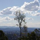 Mt Gravatt Lookout ...  by Helen Corr