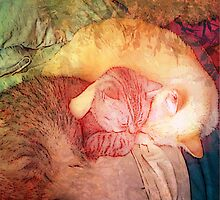 KITTY LOVE by Tammera