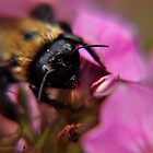bee on a flower after a rain at kingwood center by 1busymom